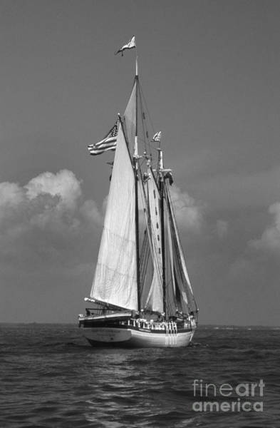 Sailing Terms Photograph - Tall Ship Harvey Gamage by Skip Willits