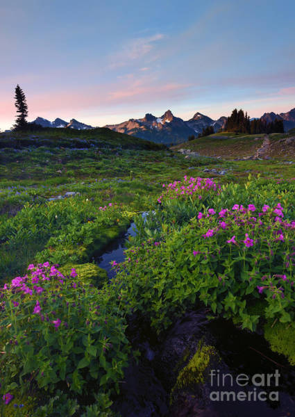 Wall Art - Photograph - Tatoosh Dawn by Mike Dawson