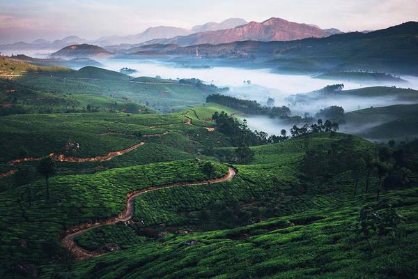 Kerala Photograph - Tea Plantation In India by Oleh slobodeniuk