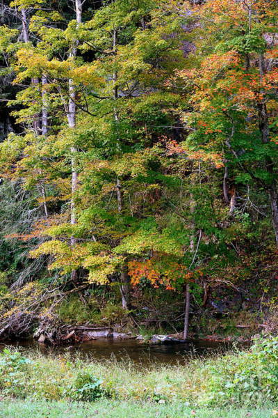 Photograph - Tennessee Autumn Stream by Carol Groenen
