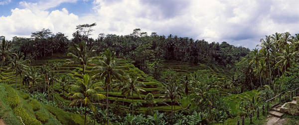 Flores Photograph - Terraced Rice Field, Flores Island by Panoramic Images