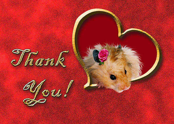 Golden Hamster Photograph - Thank You Hamster by Jeanette K