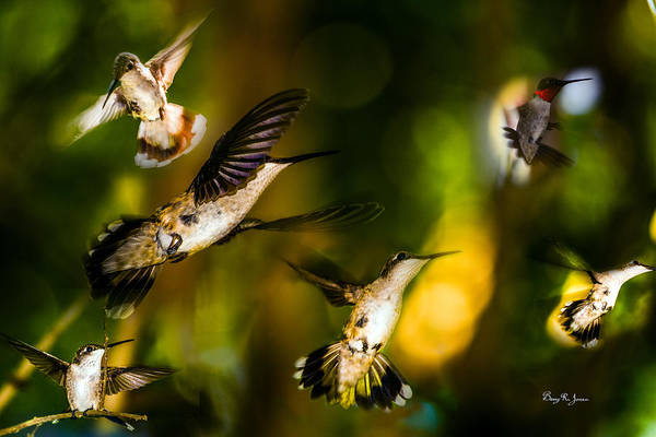 Photograph - Hummingbirds - The Gathering by Barry Jones