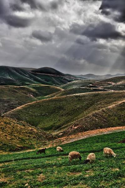 Holy Land Photograph - The Lord Is My Shepherd Judean Hills Israel by Mark Fuller
