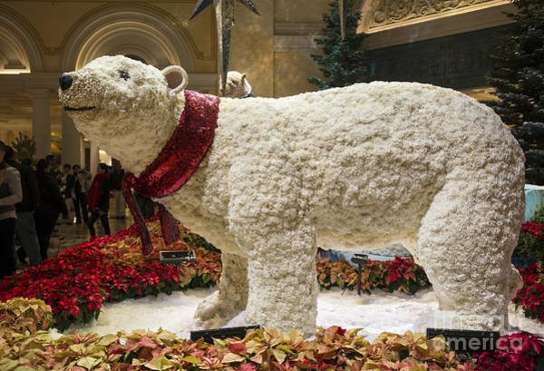 Wall Art - Photograph - The Magical Holiday Seasonal Display At The Bellagio Conservator by Jamie Pham