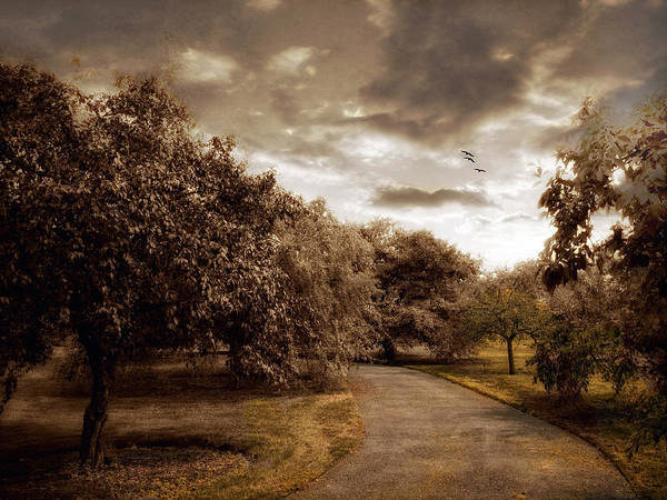 Orchard Photograph - The Orchard by Jessica Jenney