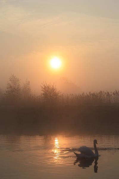 Swan Boats Photograph - The Peace Of Dawn by Linsey Williams