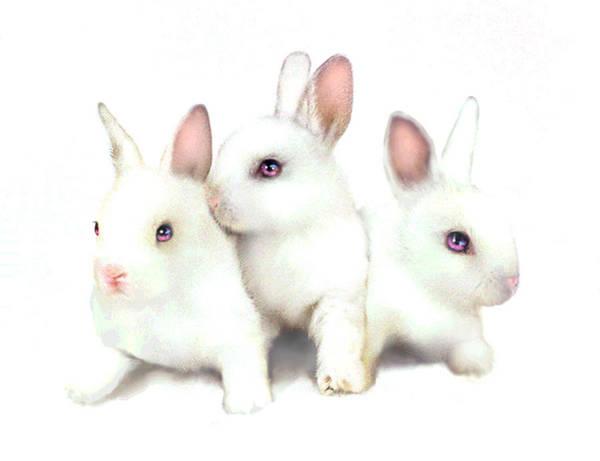Haring Digital Art - Three Bunnies by Robert Foster