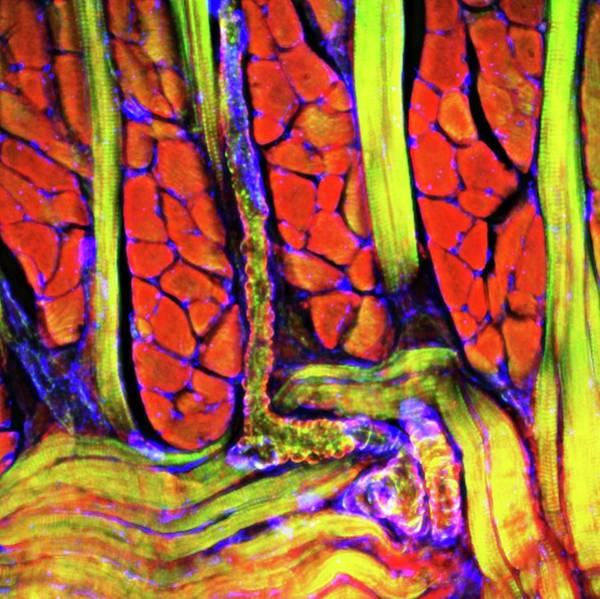 Tongue Tissue Art Print