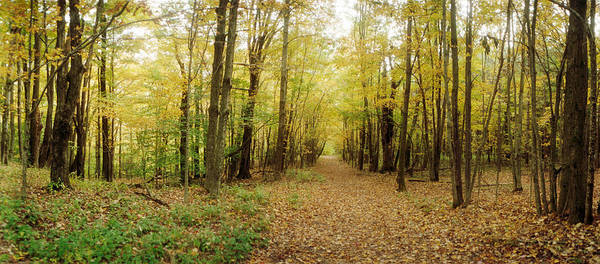Catskill Photograph - Trail Through The Forest by Panoramic Images
