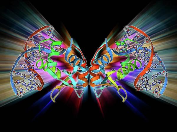 Gene Photograph - Transcription Factor Bound To Dna by Laguna Design