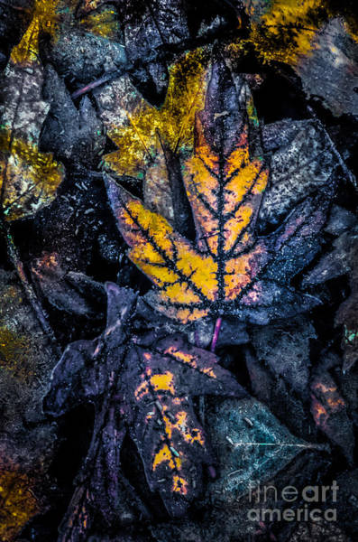 Photograph - Treasure Of Leaves by Michael Arend