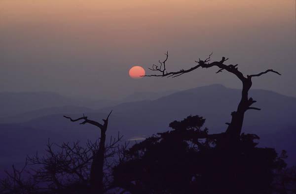 Tree And Sun From Mt Scott Art Print