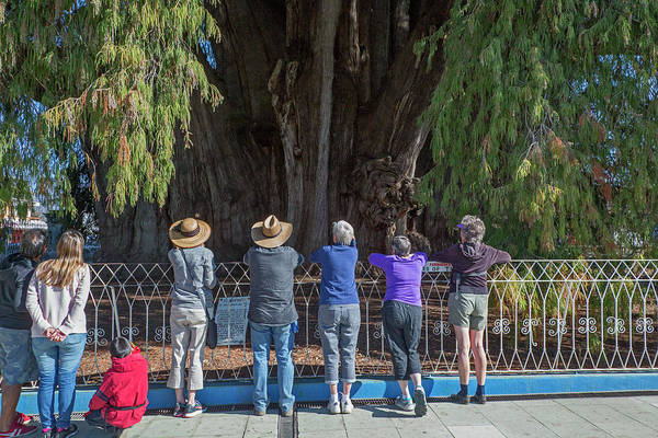 Living Things Photograph - Tree Of Tule by Jim West