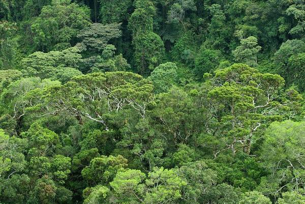 Wall Art - Photograph - Tropical Rainforest by Philippe Psaila/science Photo Library