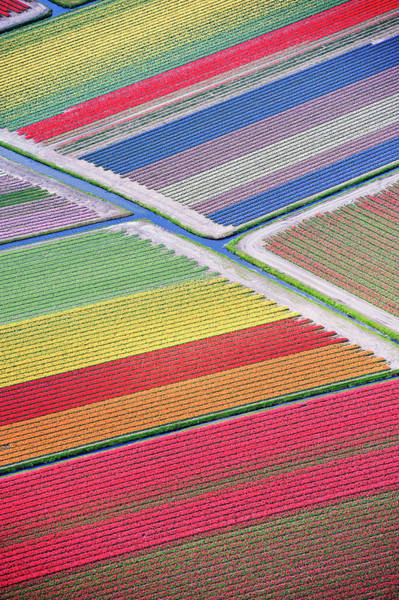 Photograph - Tulip Fields Between Sassenheim And by Atlantide Phototravel