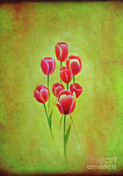 Tulipan Painting - Tulipans by Gabriela Valencia