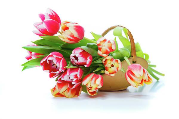 Tulipa Photograph - Tulips by Wladimir Bulgar