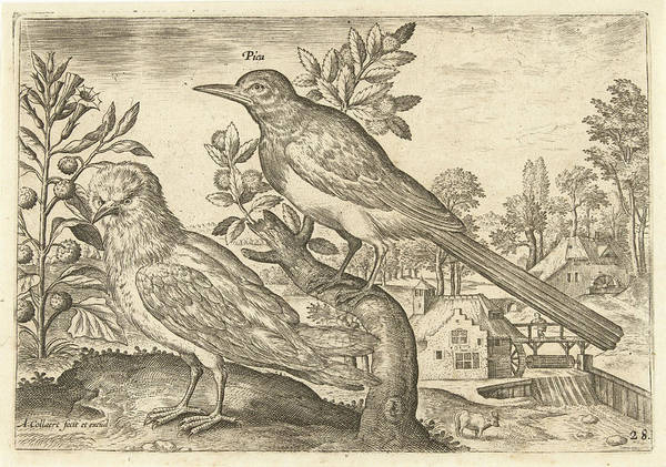 Magpies Drawing - Two Birds In A Landscape, Adriaen Collaert by Adriaen Collaert