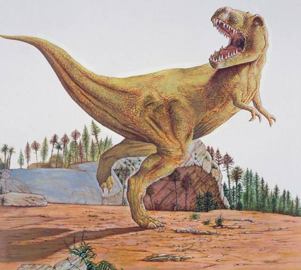 Wall Art - Photograph - Tyrannosaurus Rex by Deagostini/uig/science Photo Library
