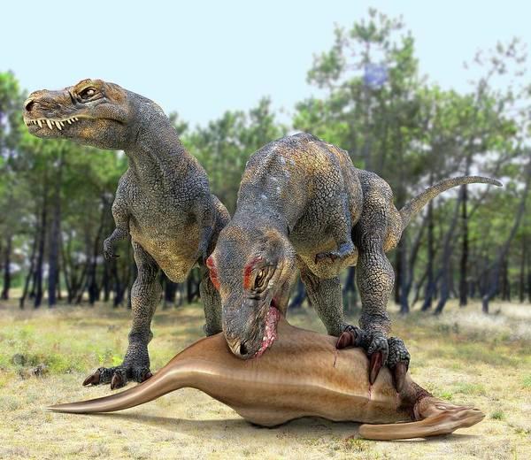Scavengers Photograph - Tyrannosaurus Rex Dinosaurs by Roger Harris