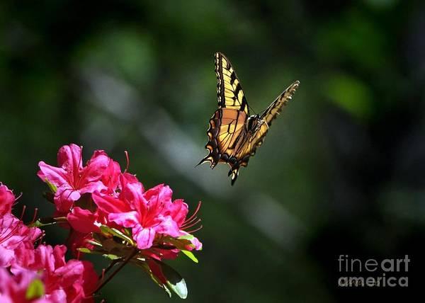 Azalia Photograph - Up And Away by Nava Thompson
