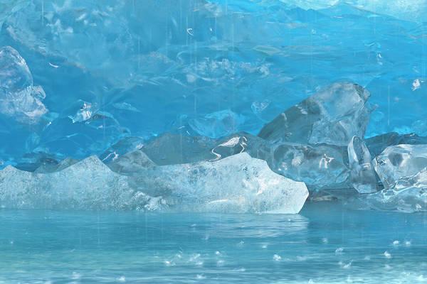 Warming Up Wall Art - Photograph - Usa, Alaska, Glacier Bay National Park by Jaynes Gallery