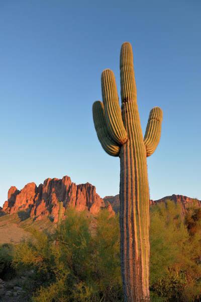 Wall Art - Photograph - Usa, Arizona Lost Dutchman State Park by Kevin Oke