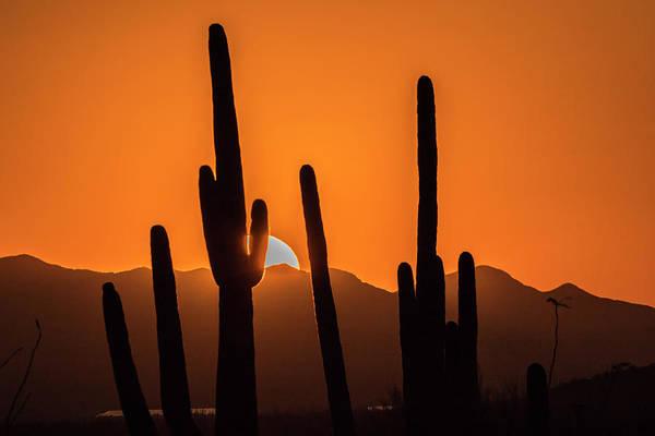 Wall Art - Photograph - Usa, Arizona, Tucson Mountain Park by Jaynes Gallery