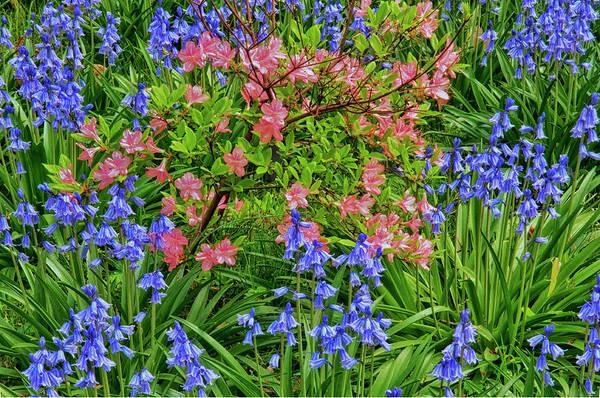 Blue Jay Photograph - Usa, Delaware, Winterthur Gardens by Jaynes Gallery