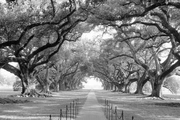 Thicket Photograph - Usa, Louisiana, New Orleans, Brick Path by Panoramic Images