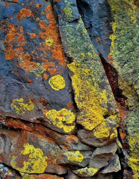 Orange Lichen Photograph - Usa, Oregon, Deschutes National Forest by Jaynes Gallery
