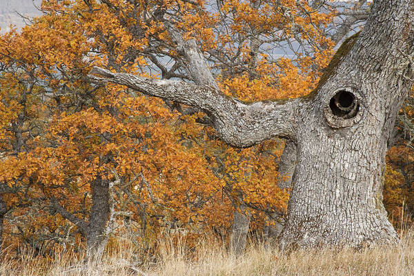 Knot Hole Photograph - Usa, Oregon, Mosier by Jaynes Gallery