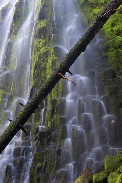 Basalt Columns Photograph - Usa, Oregon, Proxy Falls by Jaynes Gallery