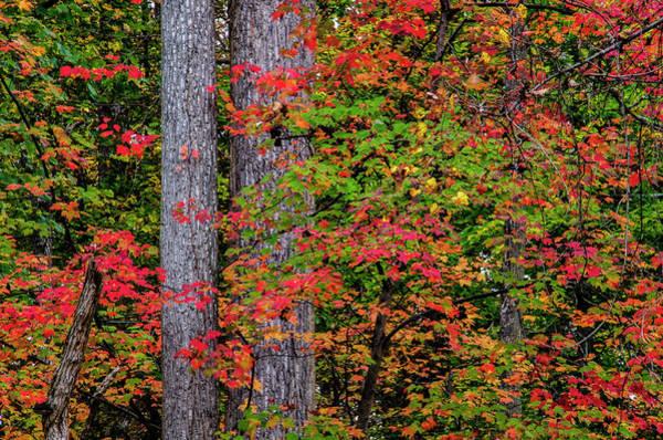 Green Jay Photograph - Usa, Virginia, Great Falls Park by Jaynes Gallery