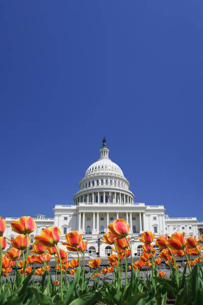 Capitol Building Photograph - Usa, Washington Dc by Jaynes Gallery