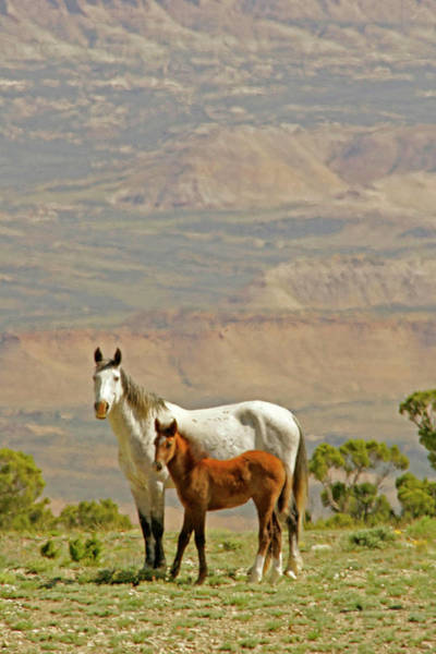 Untamed Wall Art - Photograph - Usa, Wyoming, Carbon County by Jaynes Gallery