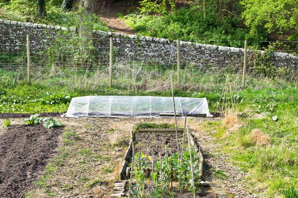 Vegetable Patch Wall Art - Photograph - Vegetable Garden by Tom Gowanlock