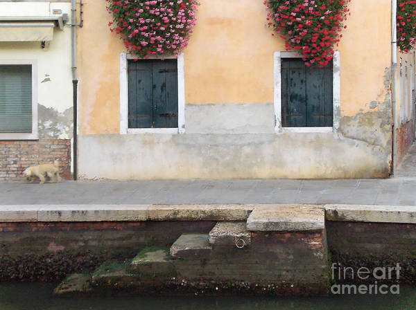 Venice Canal Shutters With Dog And Flowers Horizontal Art Print