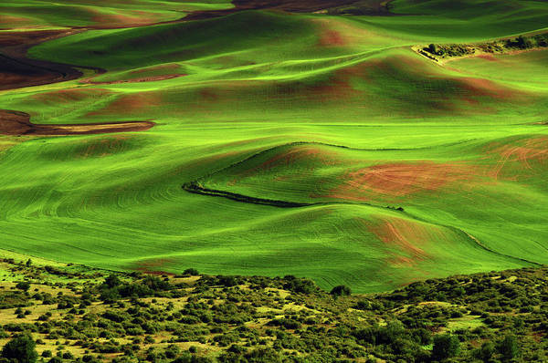 Brown County State Park Photograph - View Of Palouse From Steptoe Butte by Michel Hersen