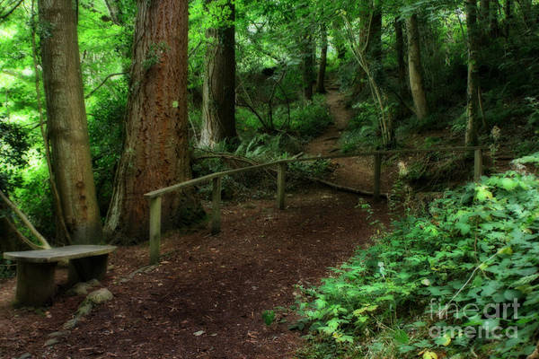 Photograph - Haunted Walking Trail In Wales by Doc Braham
