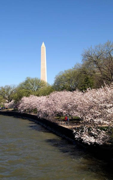 Arrival Photograph - Washington, Dc, Cherry Blossom Festival by Lee Foster