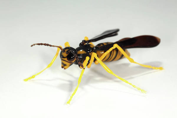 Wasp Photograph - Wasp by Tomasz Litwin