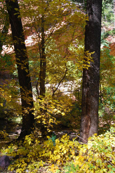 Photograph - West Fork Fall Color by Tam Ryan