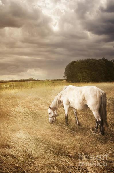 Grey Horse Photograph - White Horse by Jelena Jovanovic