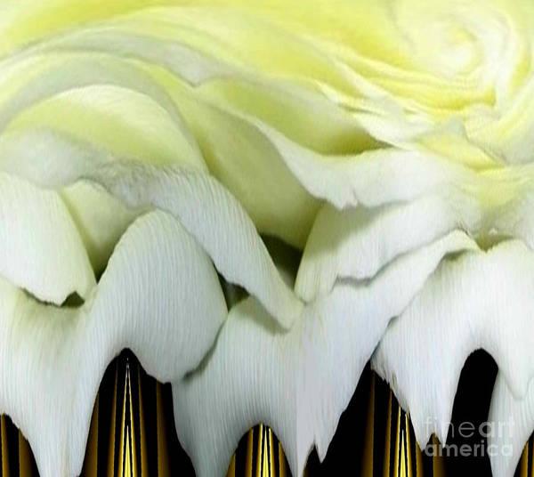 Photograph - White Rose Polar Coordinates by Rose Santuci-Sofranko