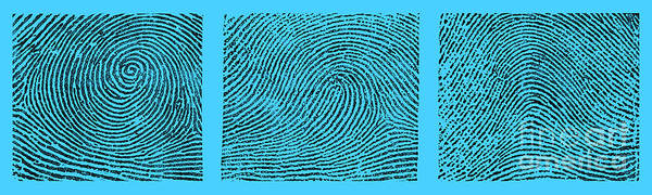 Photograph - Whorl, Loop, And Arch Fingerprints by Science Source