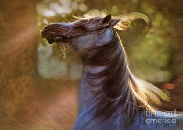 Crazy Horse Photograph - Wild Heart by Angel Ciesniarska