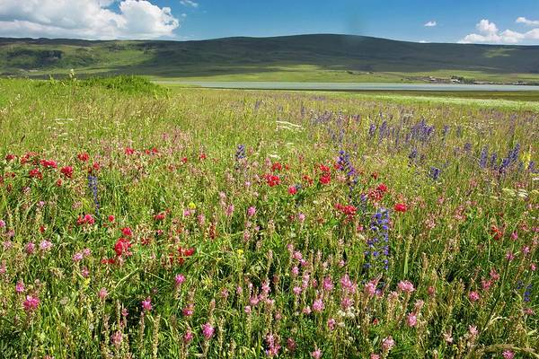 Sainfoin Wall Art - Photograph - Wildflowers In Grassland by Bob Gibbons