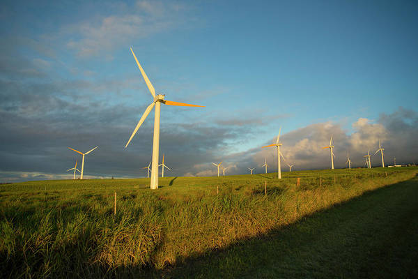 Windmills, Upolu, North Kohala, Big Art Print